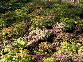 Päonien-Zuchtgarten 2008