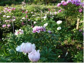 Blick in einen Zuchtgarten