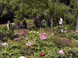 Päonien-Zuchtgarten 2009. Bereisung durch die Mitglieder der APZ.